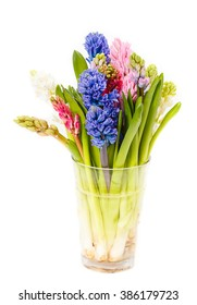 the bouquet a hyacinth in a vase on a white background, is isolated