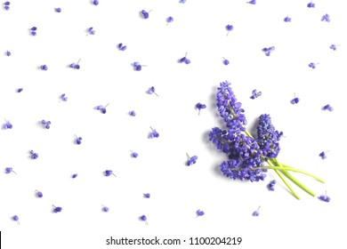 bouquet of hyacinths of color of ultraviolet on a white background. view from above, flat lay, top view