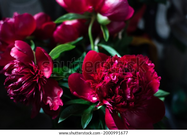bouquet-large-bright-scarlet-blooming-60