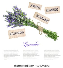 bouquet of lavender flowers isolated on white background. concept with sample text