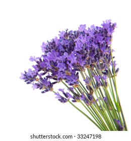 bouquet lavender flowers isolated over white