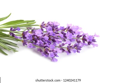 Bouquet of lavender  on a white background.
