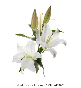 Bouquet of light lilies isolated on white background.
