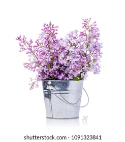 Bouquet of lilacs in a bucket isolated on a white background. Flowering of spring flowers