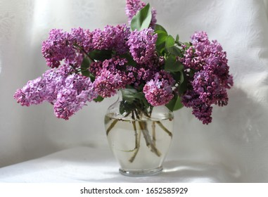 Bouquet of lilacs on a white background in a glass vase. Spring.