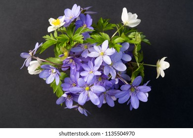 Bouquet of Liverleaf and Anemone flowers on a black background