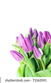 bouquet of many beautiful violet tulips