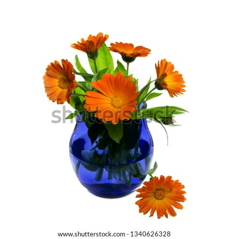 Bouquet of a marigold in a blue glass on the isolated background. Bright summer composition.