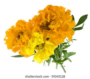 bouquet of marigold flowers isolated on white background