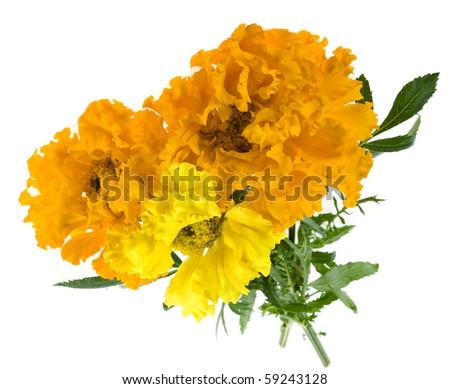Bouquet marigold flowers isolated on white stock photo edit now bouquet of marigold flowers isolated on white background mightylinksfo