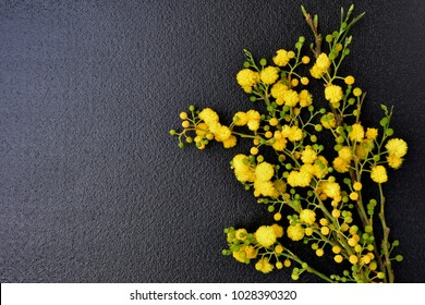 Bouquet of mimosa flowers on a black background, left copy space, greeting card.