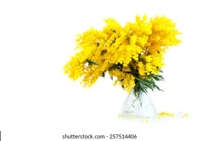 Bouquet of mimosa in vase, on white background