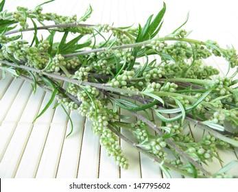 Bouquet of mugwort