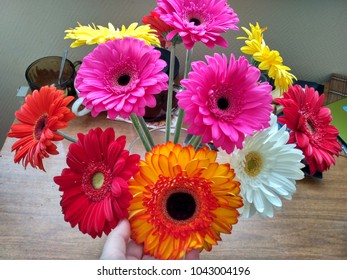 Bouquet of multicolor gerber daisies