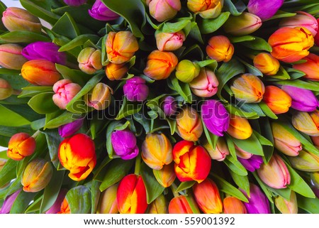 Bouquet Multicolor Tulips Fresh Spring Flowers Stock Photo Edit Now