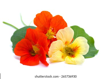 Bouquet of nasturtium on white background