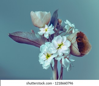 bouquet on a blue background, small flowers and buds. Studio photography.