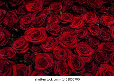 Bouquet of one hundred red roses. Celebration of engagement or wedding