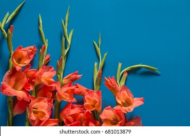 Bouquet of orange gladiolus on blue background, top view. Flat lay. Nature concept. A place for your inscription. Background for site design, landing page or blog.