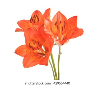 bouquet of orange lilies. Isolated on white background