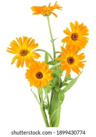 Bouquet of orange marigold flowers with leaves isolated on a white background. Calendula officinalis.