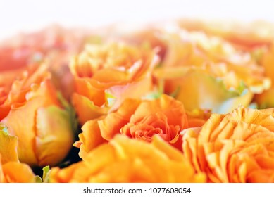 Bouquet with Orange Roses with soft blurry defocused background. Wedding flowers. Beautiful close-up of orange roses on a white background. Wedding roses as a background