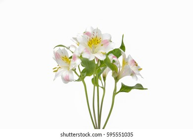 bouquet Orchid flowers, isolated on white background