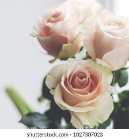 Bouquet of pale pink cream roses in white jug on a windowsill