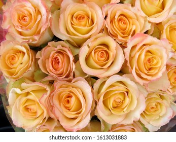 Bouquet of pale pink and yellow roses, floral background texture