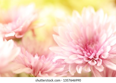 A bouquet of pink flowers and a yellow background.