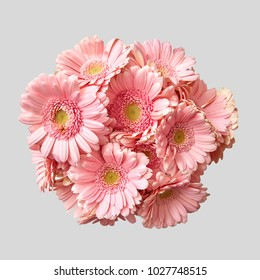 Bouquet of pink gerberas on a light gray background.