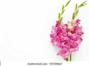 bouquet of pink  gladiolus on white background