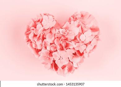 Bouquet of pink heart shaped hydrangea flower on pink background.
