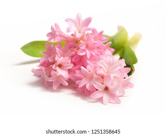 bouquet pink hyacinth on white background