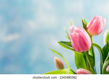 Bouquet of pink and lilac tulips in a glass vase on blue background. Free space for text