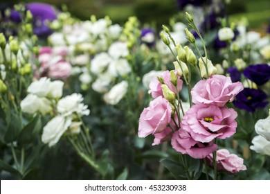 bouquet of pink lisianthus in garden