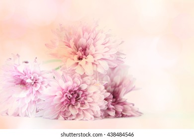 A bouquet of pink and peach colored flowers with a soft textured background.
