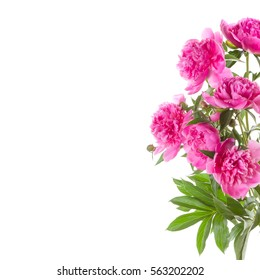 Bouquet of pink peonies on a white background. Flowers for Valentine's Day.