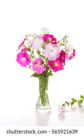 Bouquet of pink petunias in a vase on a white background.