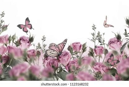 Bouquet of pink roses with butterflies, garden flowers. Floral background.