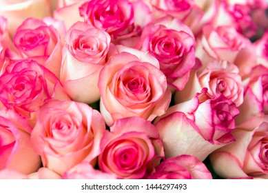 bouquet of pink roses ,flowers, rose petals,