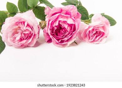 Bouquet of pink roses on white background. Flower background. Mothers Day,Wedding and Birthday concept. Copy space