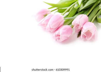 Bouquet of pink tulips isolated on a white