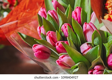 Bouquet of pink tulips on birhtday