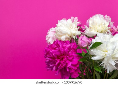 bouquet of pink and white peony flowers on pink background
