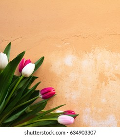 Bouquet of pink, white tulips on a orange texture, table. View from above. Flat lay