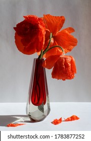 A bouquet of poppies in red glass vase ov white and grey background