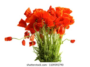 Bouquet of poppy flowers isolated on white background