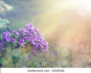 bouquet of purple flowers under the sunshine
