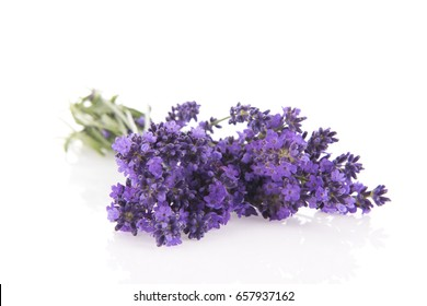 Bouquet purple Lavender isolated over white background